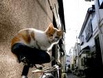 Gato sobre un bicicleta