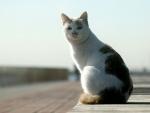 Gato sentado en un muelle
