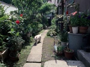 Gato en un callejón lleno de plantas