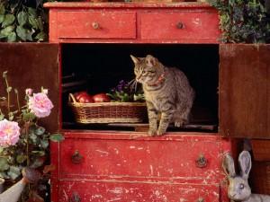 Gato dentro de un mueble antiguo