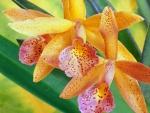 Hermosas orquídeas amarillas