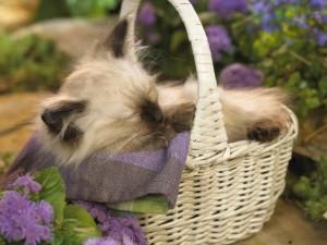 Gatito durmiendo dentro de una cesta