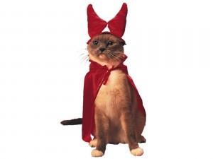 Un gato disfrazado para Halloween