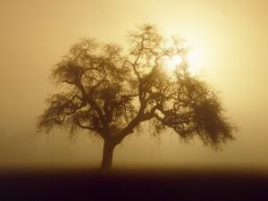 Sol y niebla junto al árbol