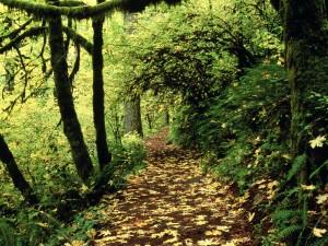 Hojas en el camino de un bosque