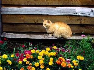 Gato descansando en un jardín