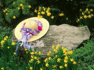 Sombrero sobre una roca