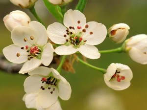 Hermosas flores con gotas de rocío