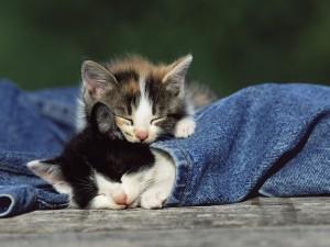 Dos gatitos dormidos