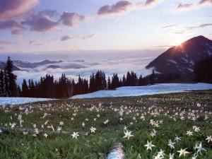 Bonito amanecer en la montaña
