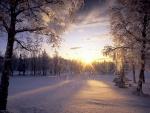 Sol iluminando los copos de nieve