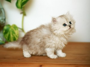 Un pequeño gato