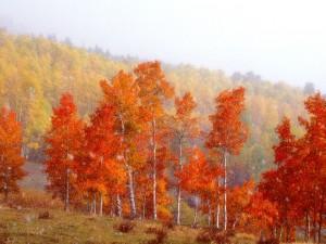 Copos de nieve en otoño
