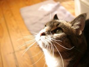 Sol iluminando los bigotes de un gato