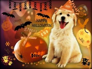 Un perro festejando Halloween