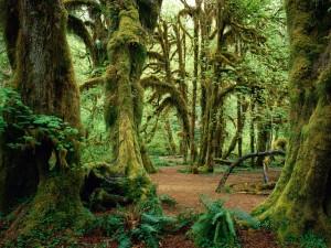 Un hermoso bosque verde