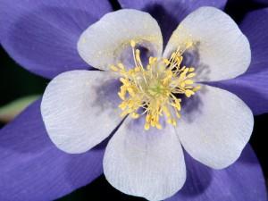 Una bonita flor