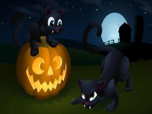 Gatitos jugando en Halloween