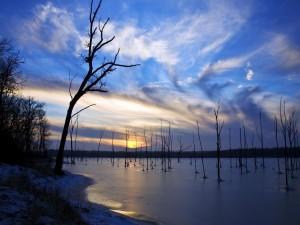 Árboles en un lago en invierno