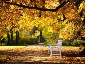 Banco en el parque en otoño
