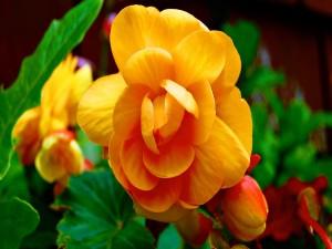 Magnífica flor amarilla