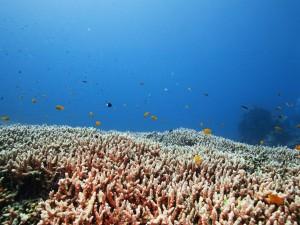 Peces nadando sobre corales en el mar