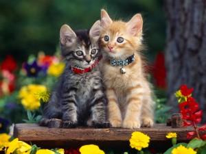 Dos gatitos junto a las flores