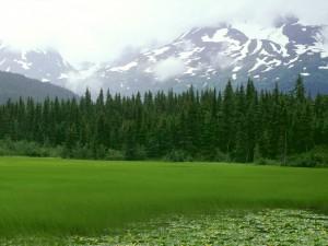 Prado verde bajo las montañas