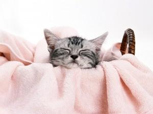 Gatito dormido en una cesta