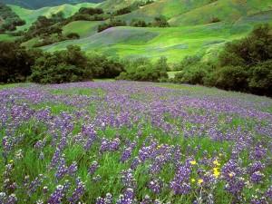 Flores en las colinas