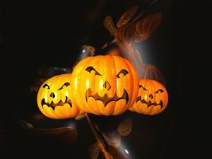 Calabazas para la celebración de Halloween