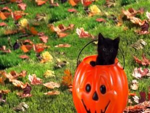 Gatito negro dentro de una calabaza