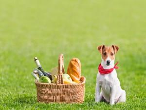 Perro sentado en el césped junto a una cesta de picnic