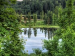 Un pequeño lago entre la hermosa vegetación
