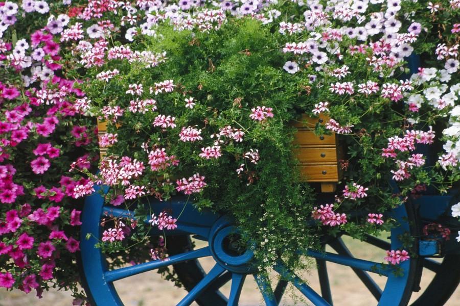 Flores en una carreta