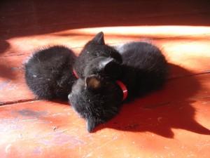 Dos gatitos durmiendo al sol