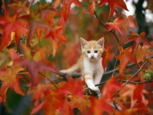 Gato sobre las ramas de un árbol otoñal