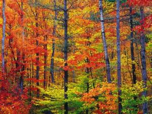 Los colores del otoño en el bosque
