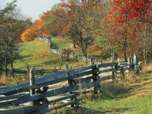 Árboles junto a una valla de madera