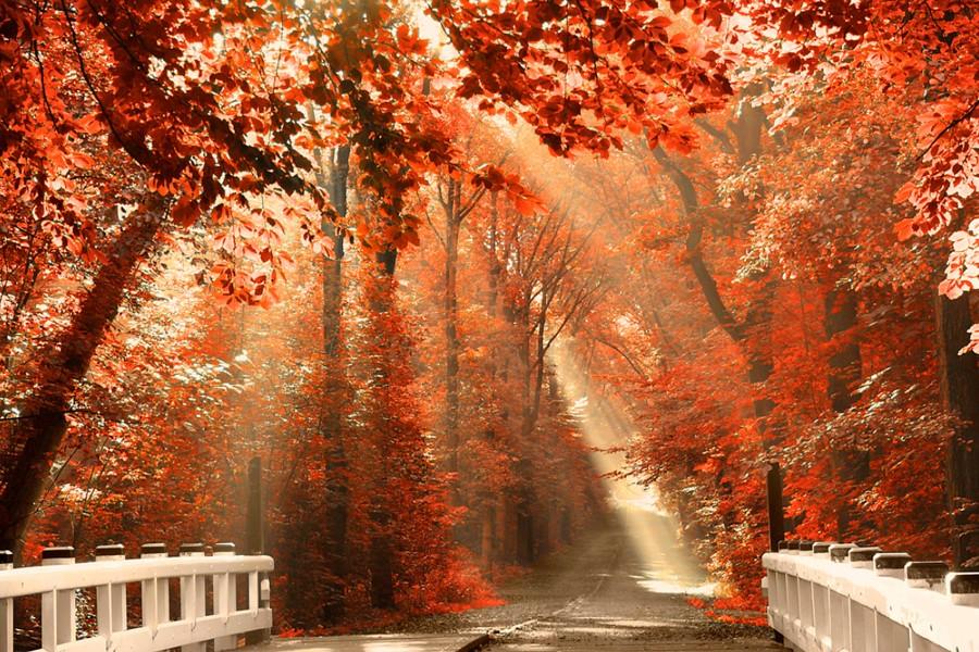 El sol a través de las hojas de otoño ilumina la carretera