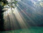Rayos de sol un claro del bosque