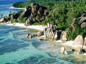 Palmeras y rocas en una playa