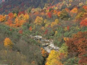 Río entre árboles otoñales