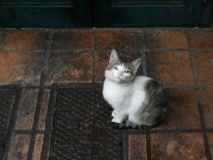Un pequeño gato callejero