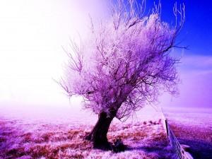 Árbol escarchado en invierno