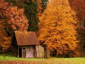 Cabaña entre árboles otoñales