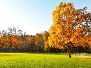 Árboles sobre la hierba verde en otoño