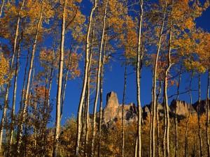 Montañas rocosas tras los árboles otoñales