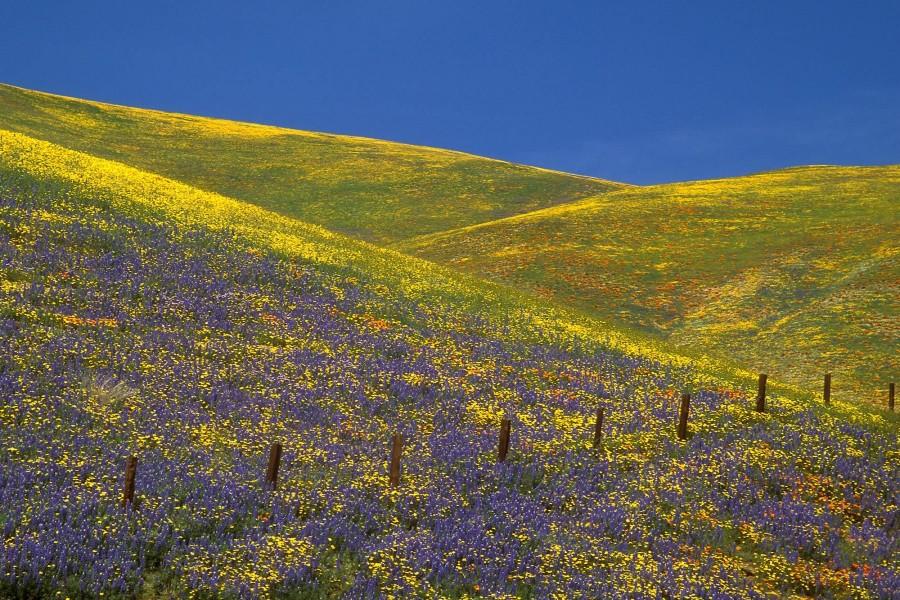 Colinas cubiertas de flores