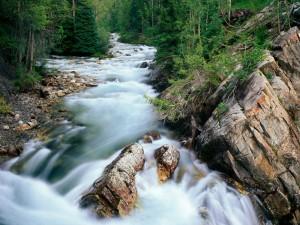 Río fluyendo entre árboles y rocas
